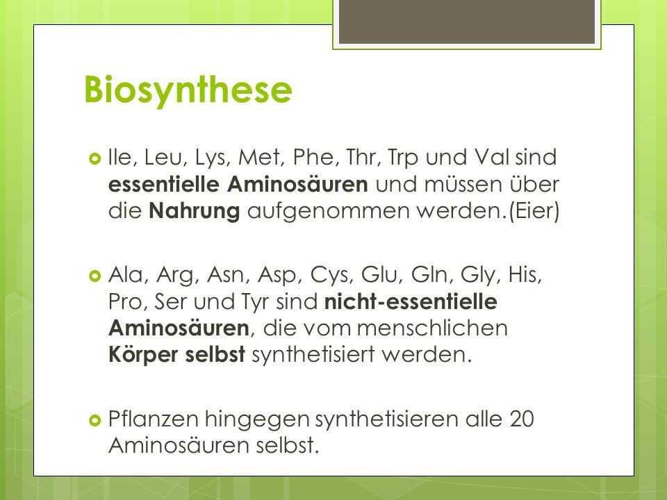 Biosynthese Ile, Leu, Lys, Met, Phe, Thr, Trp und Val sind essentielle Aminosäuren und müssen über die Nahrung aufgenommen werden.(Eier) Ala, Arg, Asn, Asp, Cys, Glu, Gln, Gly, His, Pro, Ser und Tyr sind nicht-essentielle Aminosäuren, die vom menschlichen Körper selbst synthetisiert werden.