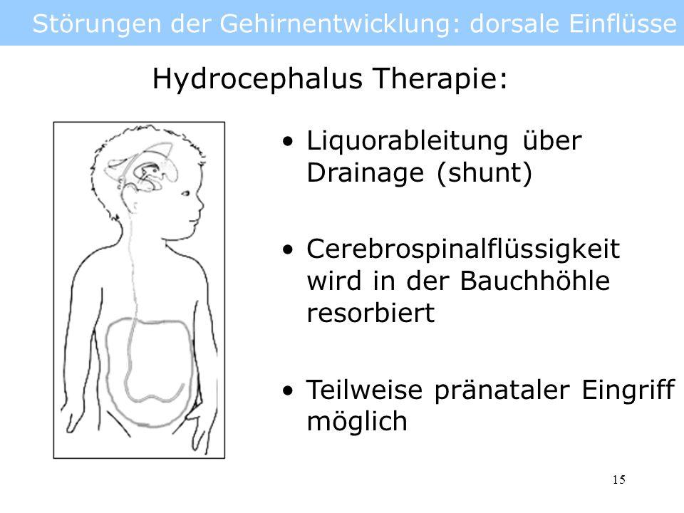 16 Störungen der Gehirnentwicklung: ventrale Einflüsse Ventrale Einflüsse