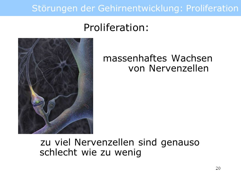 21 Störungen der Gehirnentwicklung: Proliferation Mega- und erhöhtes Gehirnvolumen und Gewicht Mehr als 2 SD größer als der Durchschnitt (Alter/Geschlecht) Mikrocephalie vermindertes Gehirnvolumen und Gewicht Mehr als 2 SD kleiner als der Durchschnitt (Alter/Geschlecht) Ab 3 SD mit mentaler Retardation verbunden