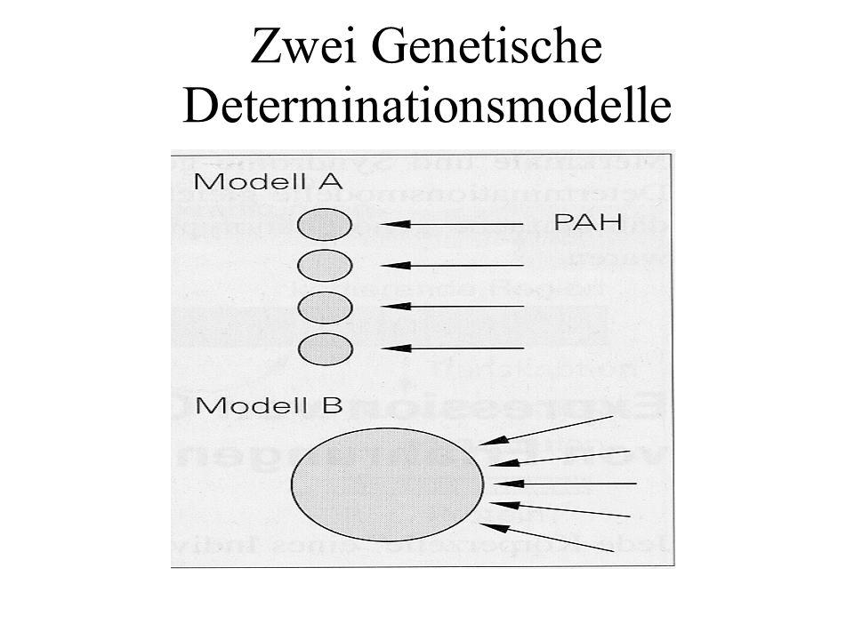 Zwei Genetische Determinationsmodelle