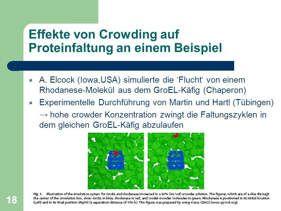 18 Effekte von Crowding auf Proteinfaltung an einem Beispiel A. Elcock (Iowa,USA) simulierte die Flucht von einem Rhodanese-Molekül aus dem GroEL-Käfi