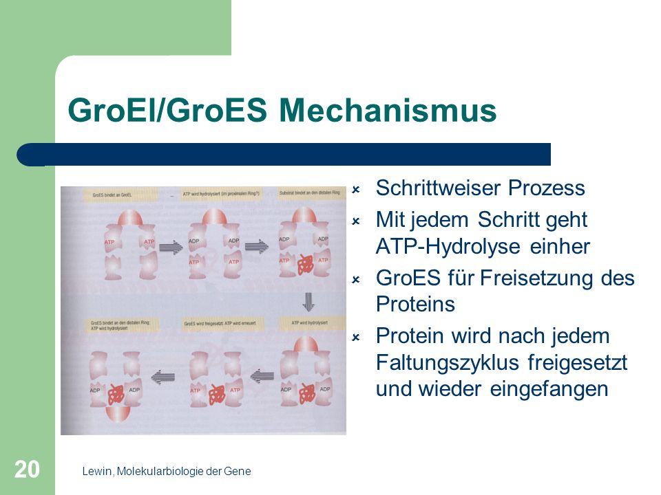 20 GroEl/GroES Mechanismus Schrittweiser Prozess Mit jedem Schritt geht ATP-Hydrolyse einher GroES für Freisetzung des Proteins Protein wird nach jede