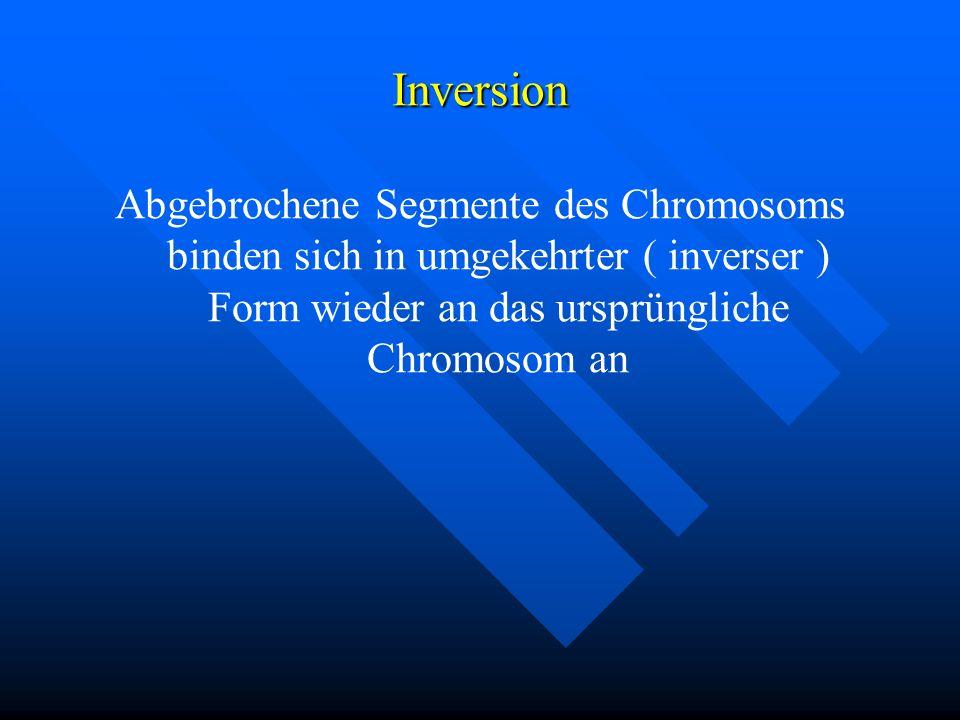 Inversion Abgebrochene Segmente des Chromosoms binden sich in umgekehrter ( inverser ) Form wieder an das ursprüngliche Chromosom an