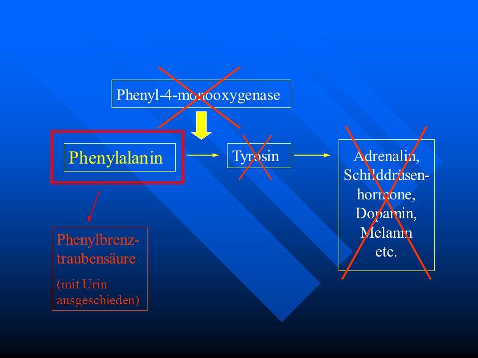 Phenylalanin Phenyl-4-monooxygenase Tyrosin Adrenalin, Schilddrüsen- hormone, Dopamin, Melanin etc. Phenylbrenz- traubensäure (mit Urin ausgeschieden)