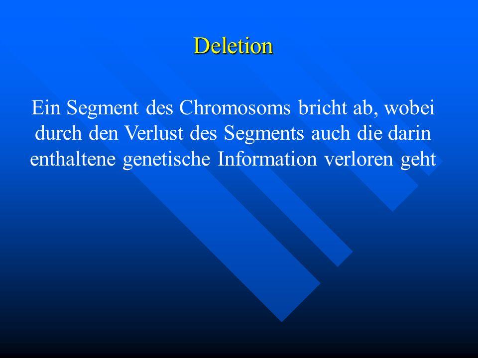Deletion Ein Segment des Chromosoms bricht ab, wobei durch den Verlust des Segments auch die darin enthaltene genetische Information verloren geht