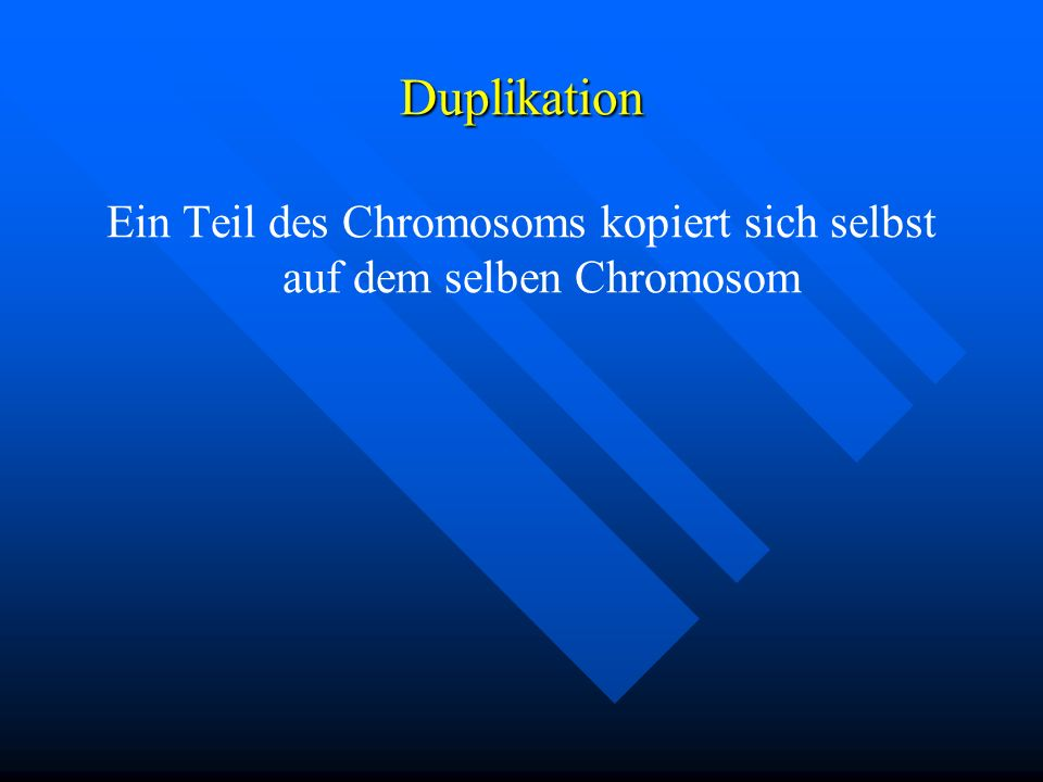 Duplikation Ein Teil des Chromosoms kopiert sich selbst auf dem selben Chromosom