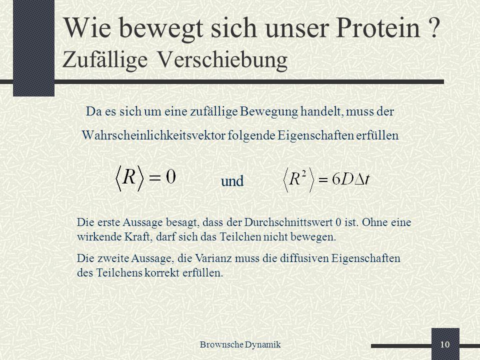 Brownsche Dynamik10 Wie bewegt sich unser Protein ? Zufällige Verschiebung Da es sich um eine zufällige Bewegung handelt, muss der Wahrscheinlichkeits