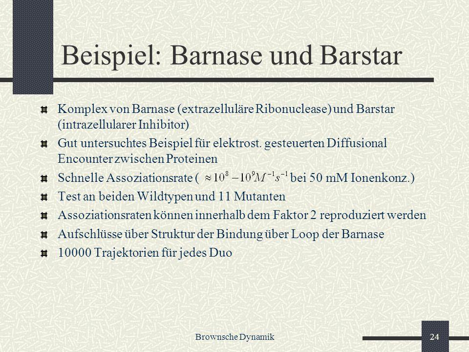 Brownsche Dynamik24 Beispiel: Barnase und Barstar Komplex von Barnase (extrazelluläre Ribonuclease) und Barstar (intrazellularer Inhibitor) Gut unters