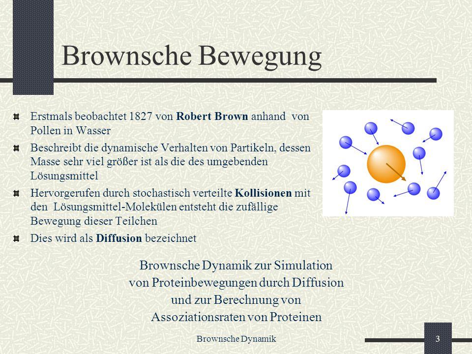 Brownsche Dynamik4 Assoziationsraten Wie oft bildet sich ein Komplex (M = mol/Liter) Experimentelle Assoziationsraten liegen zwischen und Protein Protein Assoziation wichtiger Schritt in vielen biologischen Prozessen Zum Beispiel: signal transduction, transcription, cell regulation, electron transfer Dauer der Assoziationsphase bildet obere Schranke für Assoziationsrate Prozess durch Diffusion bestimmt,wenn postdiffusionaler Assoziationsschritt Schritt viel kürzer als die Dissoziation des Proteins vom Komplex