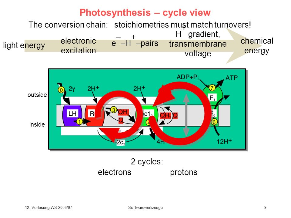 12. Vorlesung WS 2006/07Softwarewerkzeuge9 Photosynthesis – cycle view light energy electronic excitation e – –H + –pairs chemical energy H + gradient