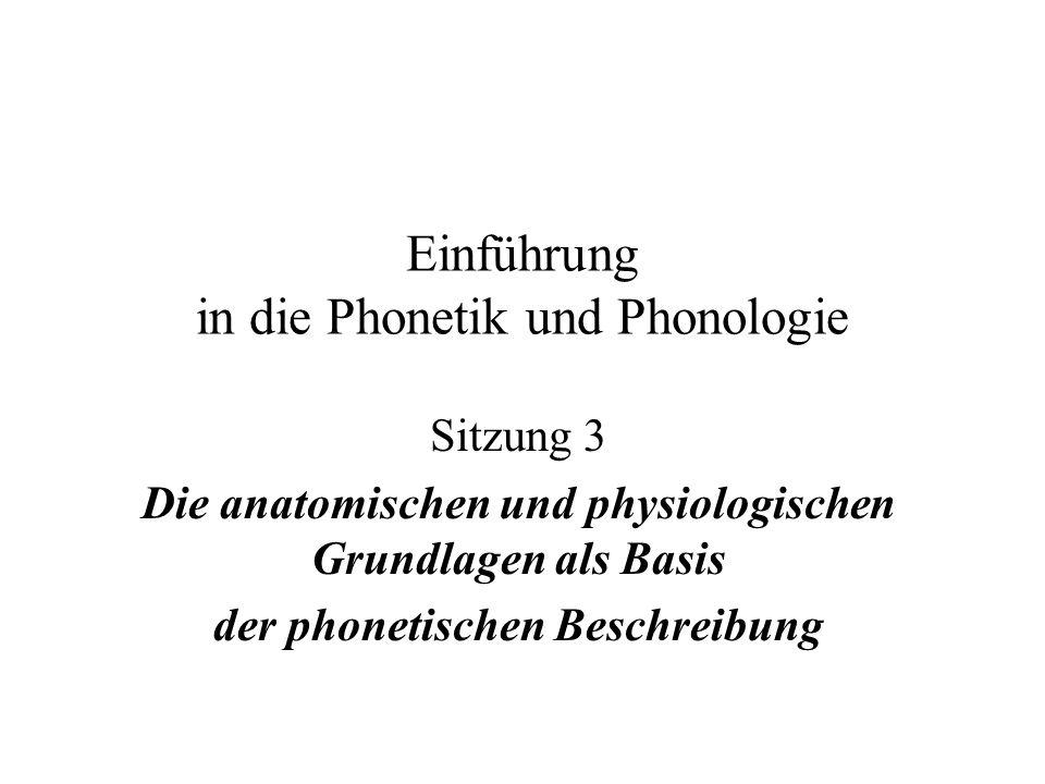 Drei Bereiche der Physiologie und der Artikulation sind zu untersuchen: Sprechatmung Stimmgebung (Phonation) Adduktion – Abduktion Myo-elastische Theorie (Bernoulli) Passive/aktive Stimmhaftigkeit bzw.