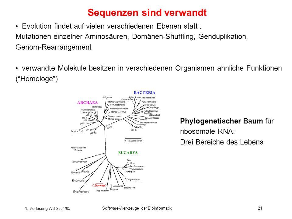 1. Vorlesung WS 2004/05 Software-Werkzeuge der Bioinformatik21 Sequenzen sind verwandt Evolution findet auf vielen verschiedenen Ebenen statt : Mutati