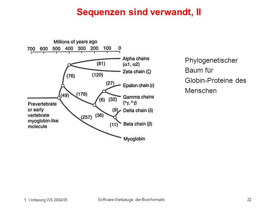 1. Vorlesung WS 2004/05 Software-Werkzeuge der Bioinformatik22 Sequenzen sind verwandt, II Phylogenetischer Baum für Globin-Proteine des Menschen