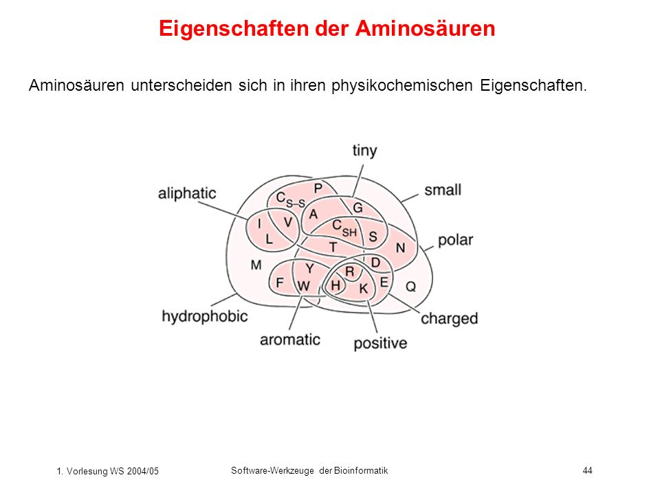 1. Vorlesung WS 2004/05 Software-Werkzeuge der Bioinformatik44 Eigenschaften der Aminosäuren Aminosäuren unterscheiden sich in ihren physikochemischen