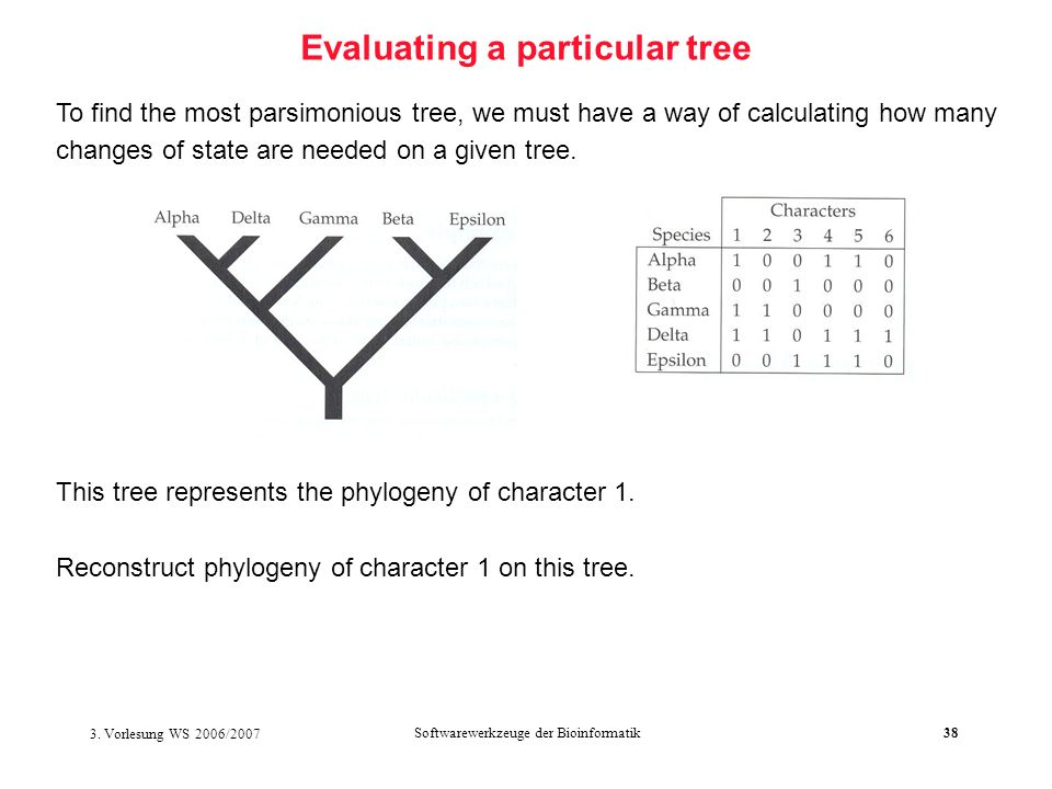 3. Vorlesung WS 2006/2007 Softwarewerkzeuge der Bioinformatik38 Evaluating a particular tree To find the most parsimonious tree, we must have a way of