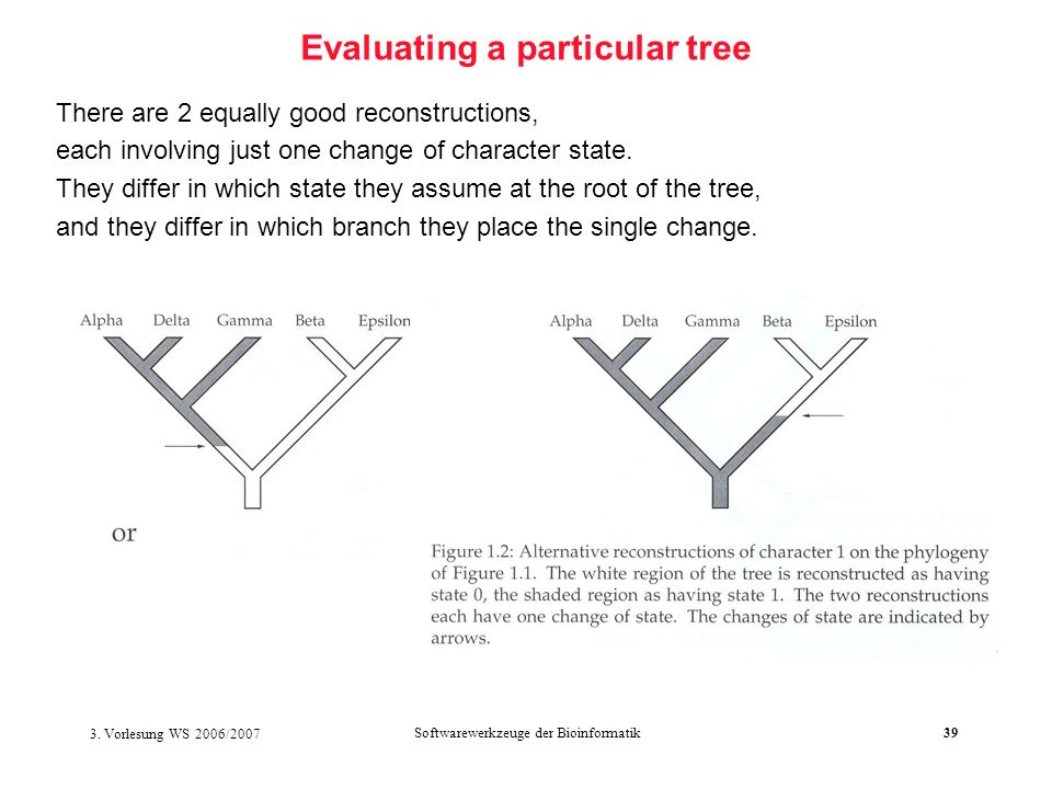3. Vorlesung WS 2006/2007 Softwarewerkzeuge der Bioinformatik39 Evaluating a particular tree There are 2 equally good reconstructions, each involving