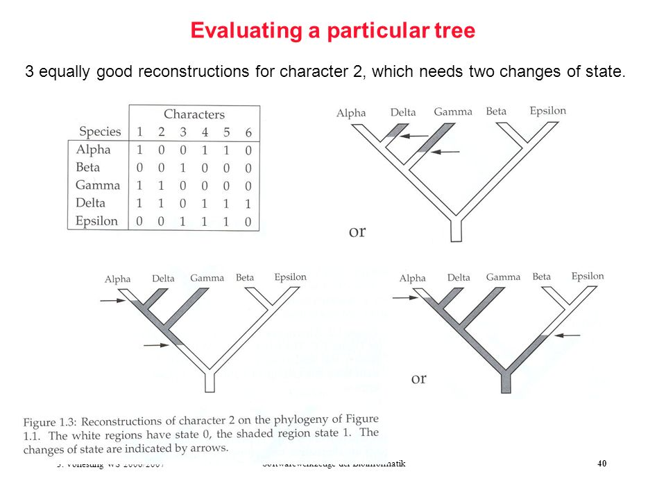 3. Vorlesung WS 2006/2007 Softwarewerkzeuge der Bioinformatik40 Evaluating a particular tree 3 equally good reconstructions for character 2, which nee
