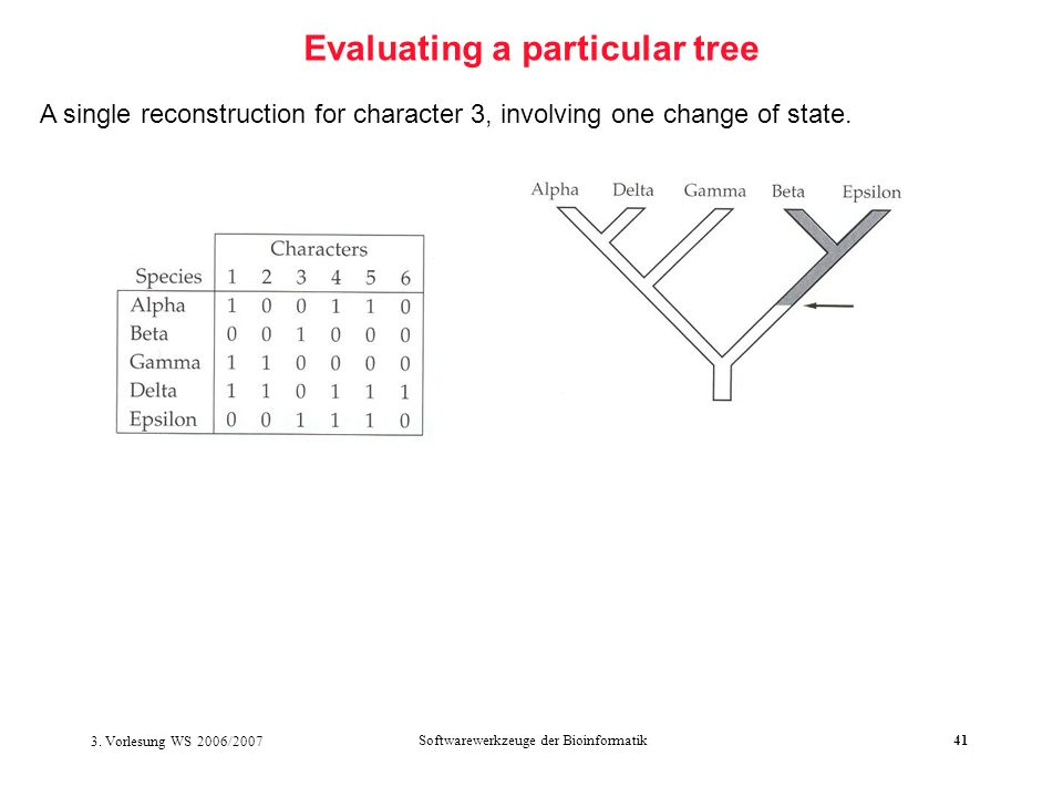 3. Vorlesung WS 2006/2007 Softwarewerkzeuge der Bioinformatik41 Evaluating a particular tree A single reconstruction for character 3, involving one ch