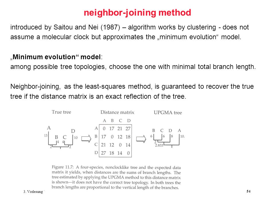 3. Vorlesung WS 2006/2007 Softwarewerkzeuge der Bioinformatik54 neighbor-joining method introduced by Saitou and Nei (1987) – algorithm works by clust