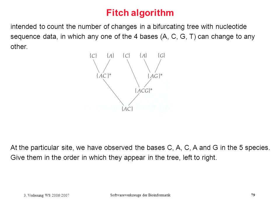 3. Vorlesung WS 2006/2007 Softwarewerkzeuge der Bioinformatik79 Fitch algorithm intended to count the number of changes in a bifurcating tree with nuc