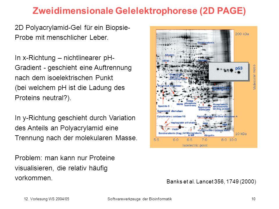 12. Vorlesung WS 2004/05Softwarewerkzeuge der Bioinformatik10 Zweidimensionale Gelelektrophorese (2D PAGE) 2D Polyacrylamid-Gel für ein Biopsie- Probe