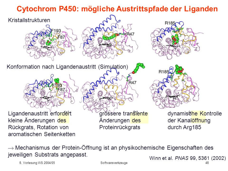 8. Vorlesung WS 2004/05Softwarewerkzeuge48 Cytochrom P450: mögliche Austrittspfade der Liganden Kristallstrukturen Konformation nach Ligandenaustritt