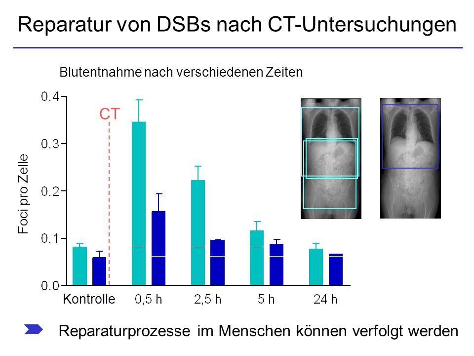 Reparatur von DSBs nach CT-Untersuchungen Reparaturprozesse im Menschen können verfolgt werden Blutentnahme nach verschiedenen Zeiten CT Foci pro Zell