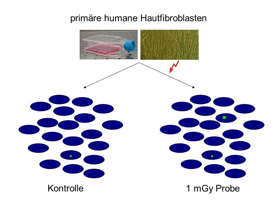 1 mGy Probe primäre humane Hautfibroblasten Kontrolle