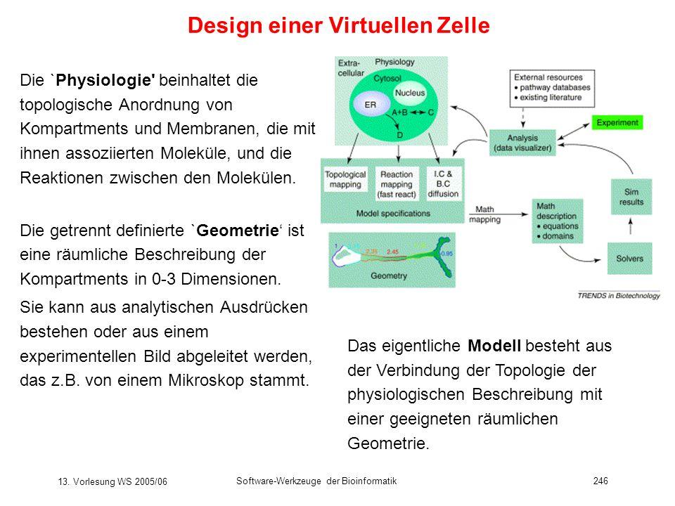 13. Vorlesung WS 2005/06 Software-Werkzeuge der Bioinformatik246 Design einer Virtuellen Zelle Die `Physiologie' beinhaltet die topologische Anordnung