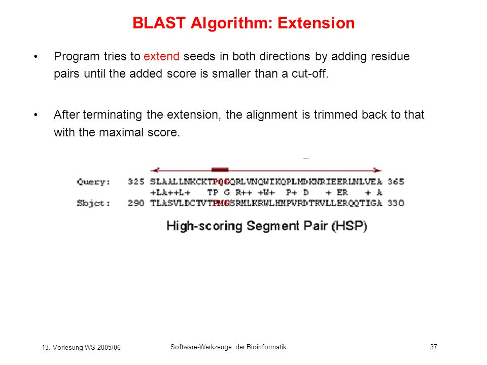13. Vorlesung WS 2005/06 Software-Werkzeuge der Bioinformatik37 BLAST Algorithm: Extension Program tries to extend seeds in both directions by adding