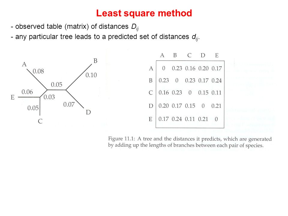 13. Vorlesung WS 2005/06 Software-Werkzeuge der Bioinformatik93 Least square method - observed table (matrix) of distances D ij - any particular tree