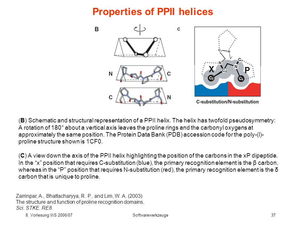 8. Vorlesung WS 2006/07Softwarewerkzeuge37 Properties of PPII helices Zarrinpar, A., Bhattacharyya, R. P., and Lim, W. A. (2003) The structure and fun