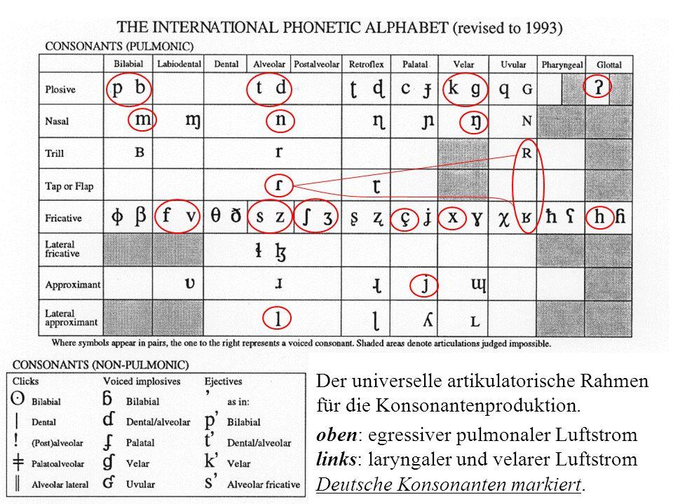 Der universelle artikulatorische Rahmen für die Konsonantenproduktion. oben: egressiver pulmonaler Luftstrom links: laryngaler und velarer Luftstrom D
