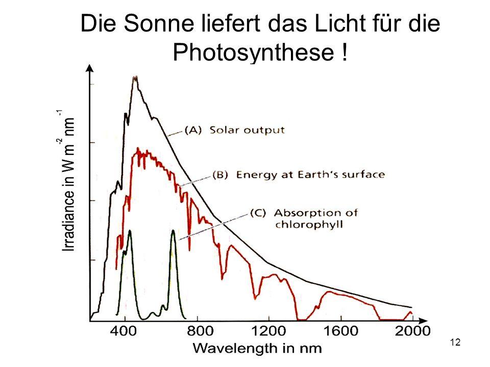 12 Die Sonne liefert das Licht für die Photosynthese !