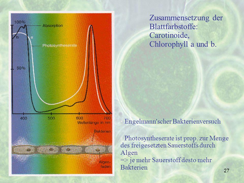 27 Zusammensetzung der Blattfarbstoffe: Carotinoide, Chlorophyll a und b. Engelmann'scher Bakterienversuch Photosyntheserate ist prop. zur Menge des f