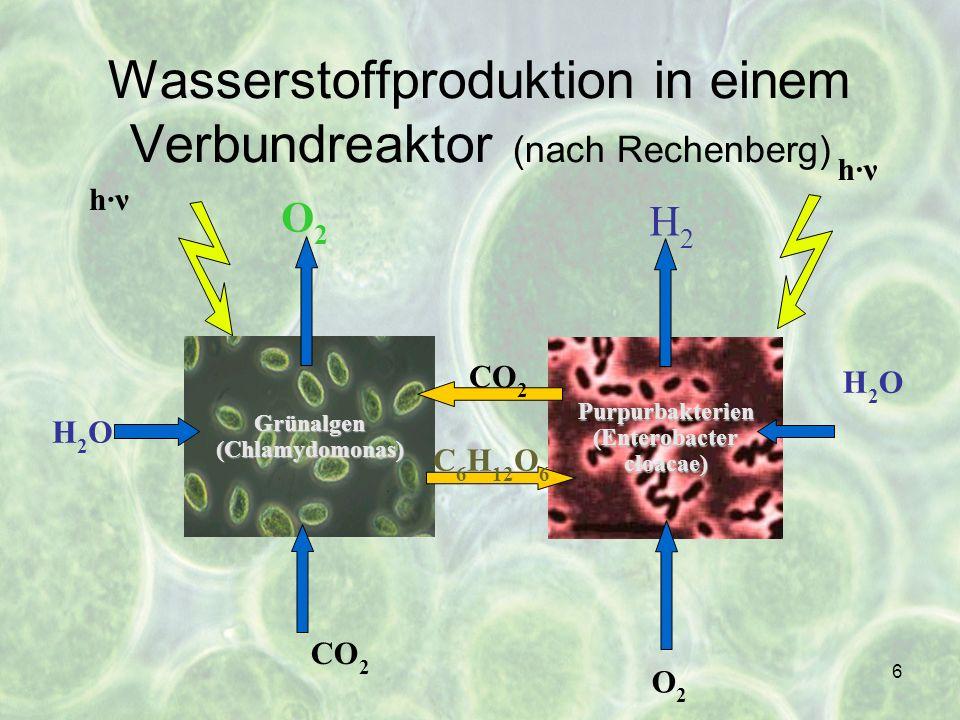 6 Grünalgen(Chlamydomonas) Purpurbakterien (Enterobacter cloacae) C 6 H 12 O 6 CO 2 O2O2 H2OH2O H2H2 H2OH2O h·ν CO 2 O2O2 Wasserstoffproduktion in ein