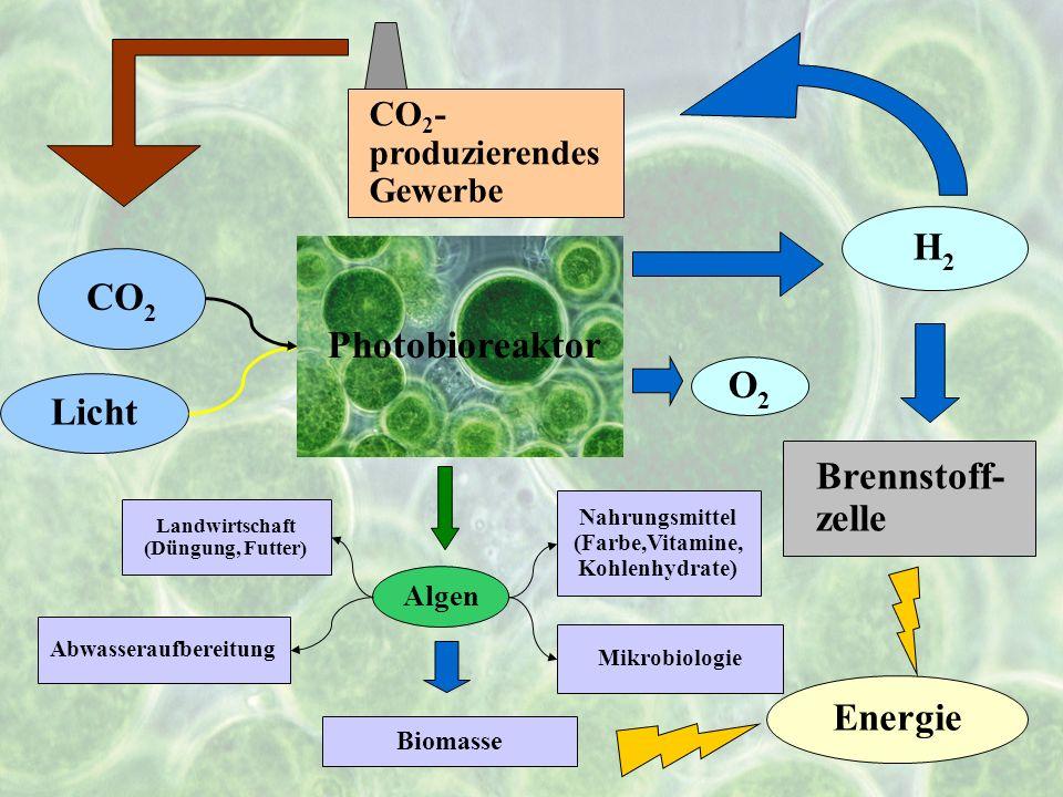 7 Photobioreaktor CO 2 Licht H2H2 Energie Brennstoff- zelle CO 2 - produzierendes Gewerbe Algen Biomasse Abwasseraufbereitung Landwirtschaft (Düngung,