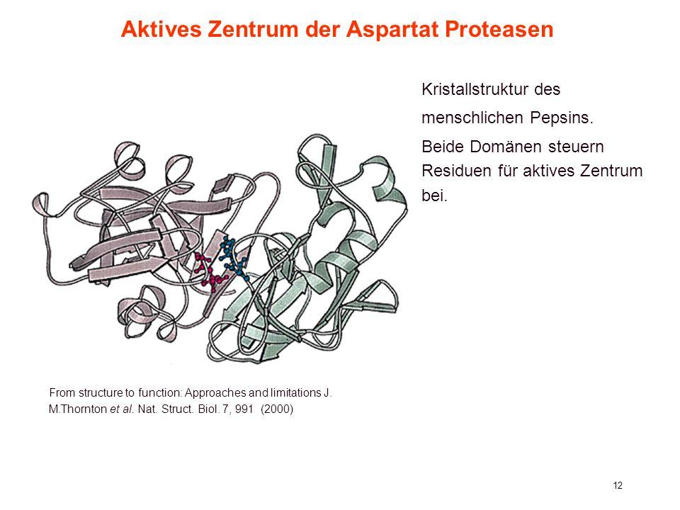 6. Vorlesung WS 2006/07Softwarewerkzeuge12 Aktives Zentrum der Aspartat Proteasen From structure to function: Approaches and limitations J. M.Thornton
