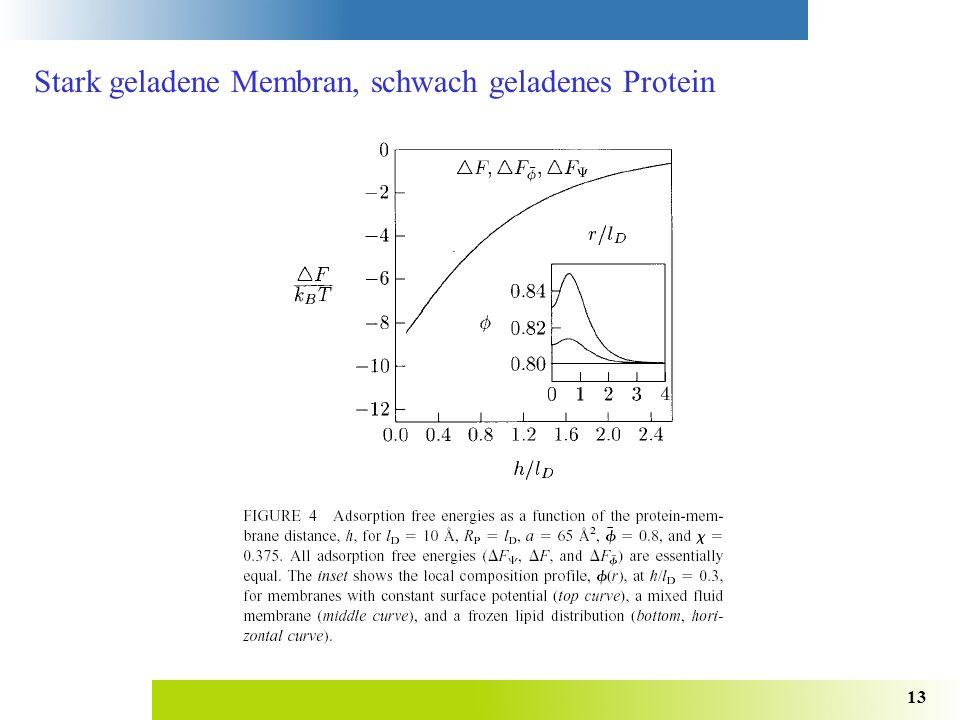 13 Stark geladene Membran, schwach geladenes Protein