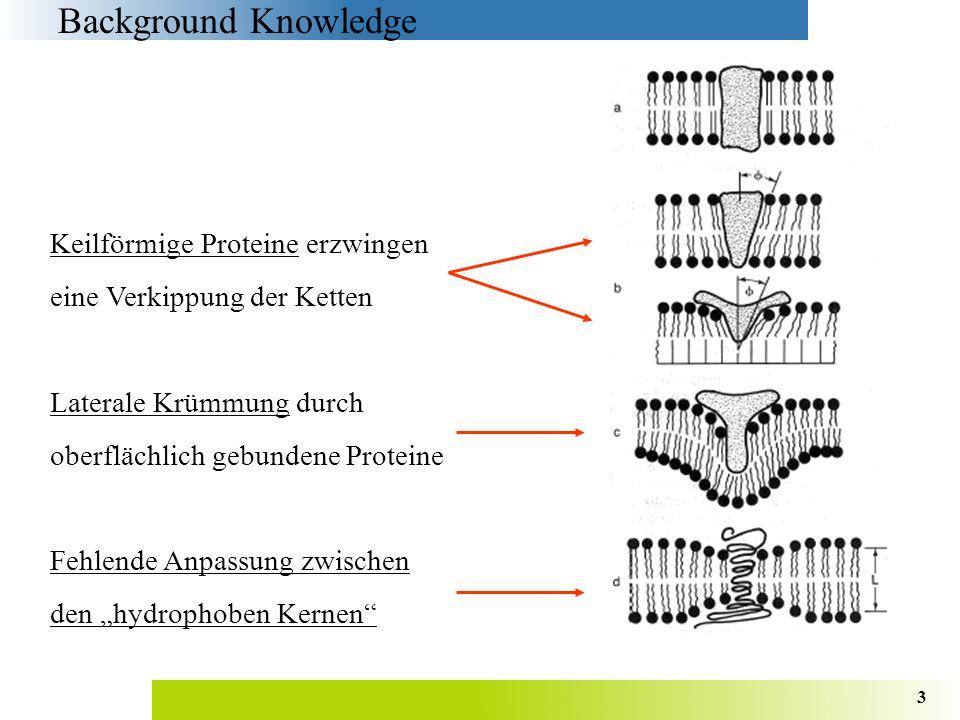 4 www.oci.unizh.ch/edu/lectures/material/OCV/Kap2/kap2.2.html Micelle Background Knowledge