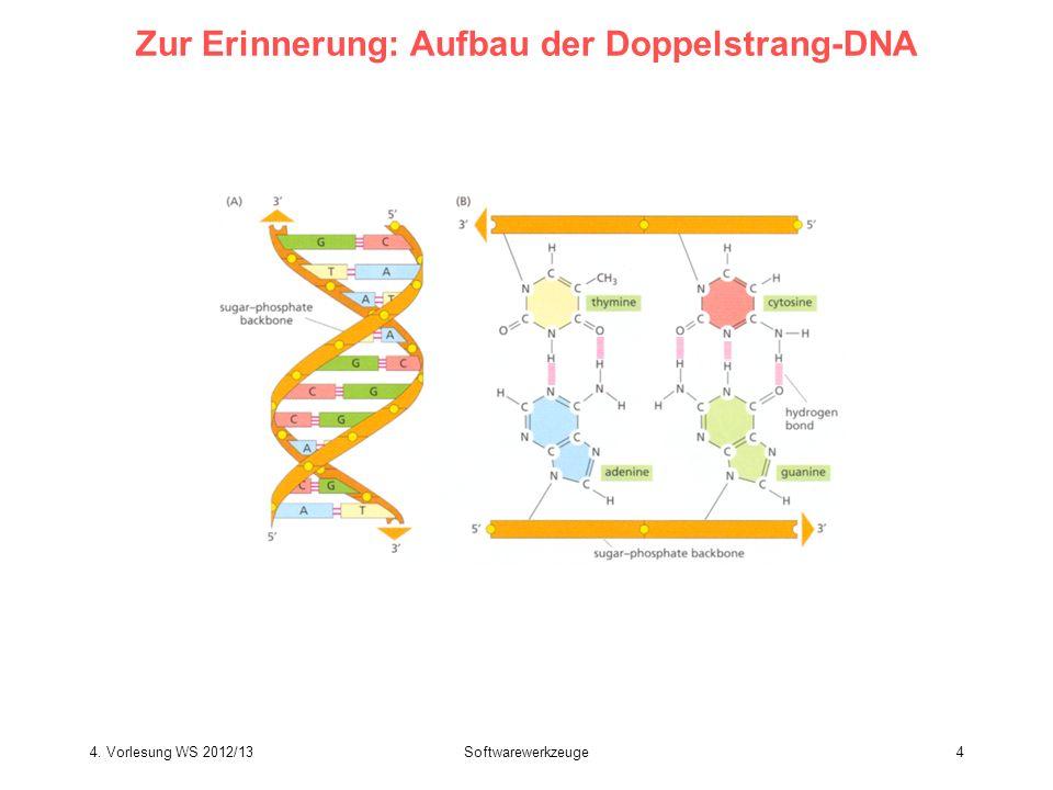 Softwarewerkzeuge4 Zur Erinnerung: Aufbau der Doppelstrang-DNA 4. Vorlesung WS 2012/13