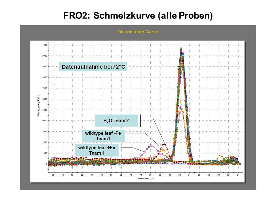 FRO2: Schmelzkurve (alle Proben) wildtype leaf +Fe Team 1 H 2 O Team 2 wildtype leaf -Fe Team1 Datenaufnahme bei 72°C