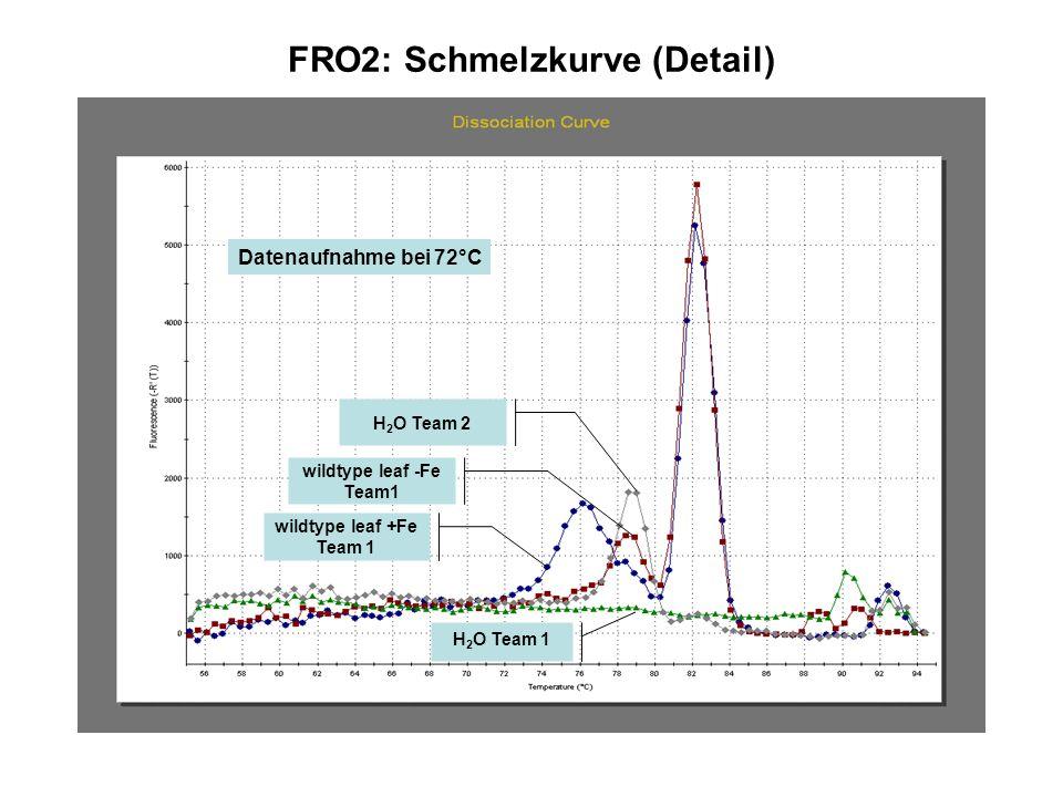 FRO2: Schmelzkurve (Detail) wildtype leaf +Fe Team 1 H 2 O Team 2 wildtype leaf -Fe Team1 H 2 O Team 1 Datenaufnahme bei 72°C