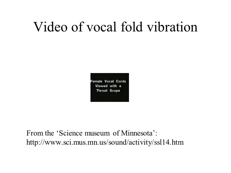 Video of vocal fold vibration From the Science museum of Minnesota: http://www.sci.mus.mn.us/sound/activity/ssl14.htm