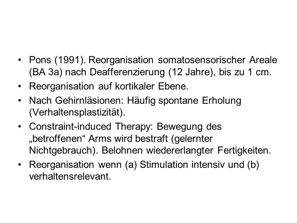 Pons (1991). Reorganisation somatosensorischer Areale (BA 3a) nach Deafferenzierung (12 Jahre), bis zu 1 cm. Reorganisation auf kortikaler Ebene. Nach