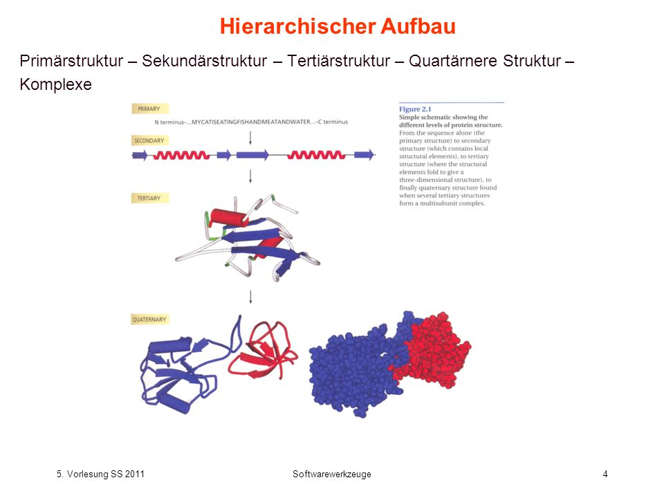 5. Vorlesung SS 2011Softwarewerkzeuge4 Hierarchischer Aufbau Primärstruktur – Sekundärstruktur – Tertiärstruktur – Quartärnere Struktur – Komplexe