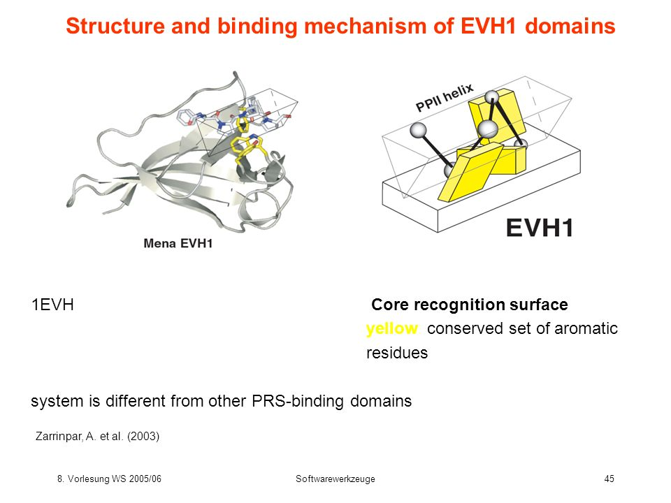 8. Vorlesung WS 2005/06Softwarewerkzeuge45 Structure and binding mechanism of EVH1 domains 1EVH Core recognition surface yellow: conserved set of arom