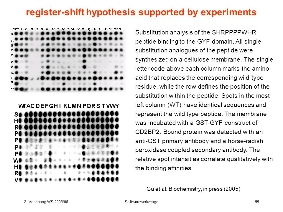 8. Vorlesung WS 2005/06Softwarewerkzeuge55 register-shift hypothesis supported by experiments Gu et al. Biochemistry, in press (2005) Substitution ana