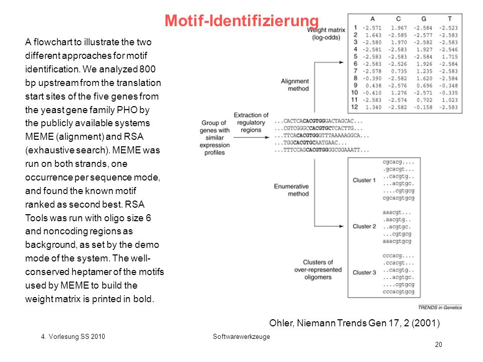 4. Vorlesung SS 2010Softwarewerkzeuge 20 Motif-Identifizierung A flowchart to illustrate the two different approaches for motif identification. We ana
