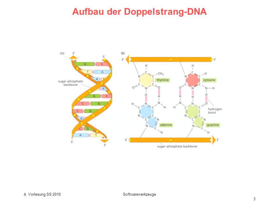 4. Vorlesung SS 2010Softwarewerkzeuge 3 Aufbau der Doppelstrang-DNA